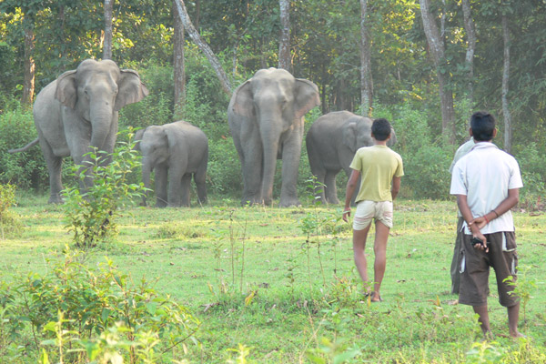 Chester Zoo's Act for Wildlife supports the Assam Haathi Project in India, which is mitigating conflict between local people and elephants. Photo courtesy: Act for Wildlife.