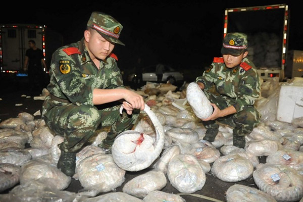 Authorities confiscate nearly 1,000 dead pangolins.