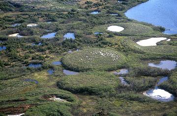Paisaje sobre permafrost. El permafrost crea formaciones paisajísticas conocidas como pelsas. Foto: Dentren.