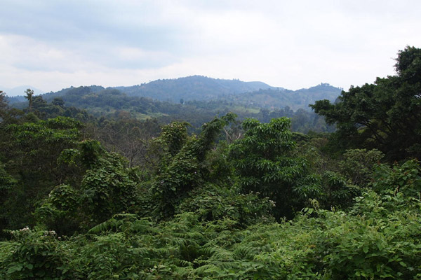 Montane forests in Tanzania. Photo by: Nika Levikov.