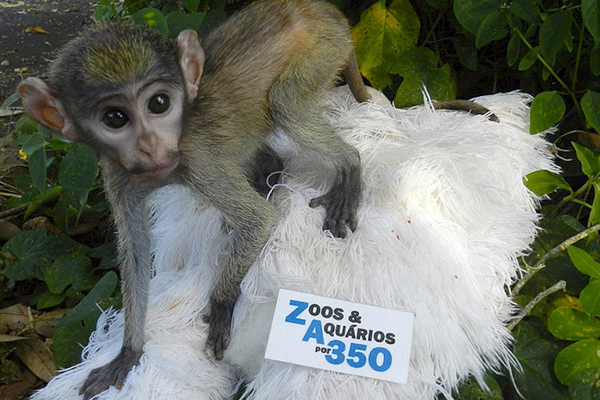 Baby macaque for 350. Photo by: Bauru Zoo, Brazil.