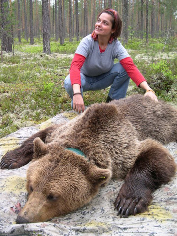 Fredriksson researching brown bears. Photo courtesy of Gabriella Fredriksson.