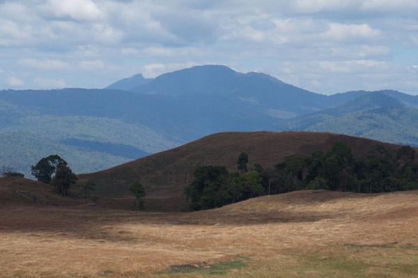 Le lointain Parc National de Virachey pourrait encore recéler une importante faune secrète. Photo de : Habitat ID.