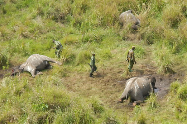 Elephant poaching massacre site in Garamba National Park. Photo by: African Parks.