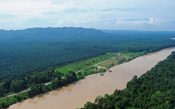 Kinabatangan River: oil palm plantation on the left, rainforest on the right. Photo by: Azri Sawang/HUTAN.