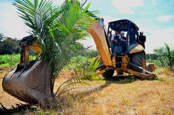 Datuk Pang Yuk Ming in command of the excavator, pulling out an oil palm tree. Photo by: Baharudin Budin/Danau Girang Field Centre.