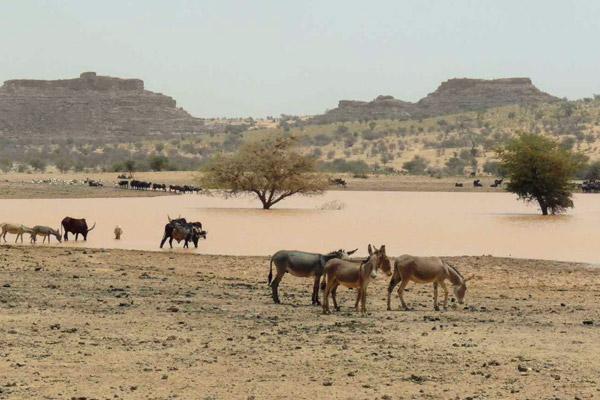 El humedal donde se reúnen ganado y buitres durante la temporada seca en la región del Sahel. Fotografía de SCF/Lifeneophron.eu.