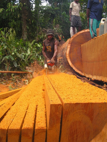 Small-scale timber cutting in Papua, Indonesia--views often differ concerning the acceptability of such activities, but do we have all the information we need? Photo courtesy of: Doug Sheil.