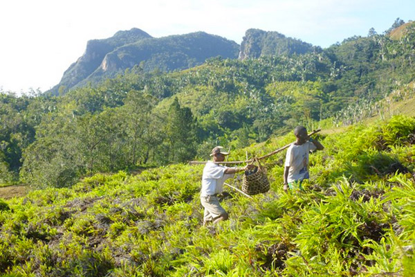 Planting trees on the hillsides of Madagascar. Photo courtesy of the Madagascar Biodiversity Partnership and Conservation Fusion.