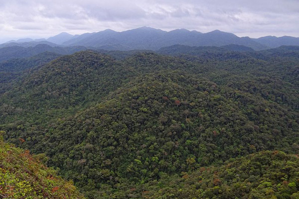 With only 3.5 percent intact vegetation left in the Atlantic Forest, it is the world's most imperiled biodiversity hotspot. This is an image of intact forest in Intervales State Park. Photo by: Bjørn Christian Tørrissen