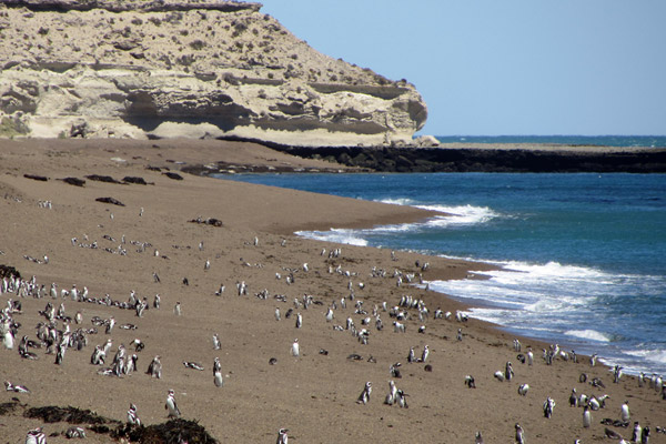 Magellanic penguins colonies on the Península Valdés. Photo by: G. Harris/WCS.