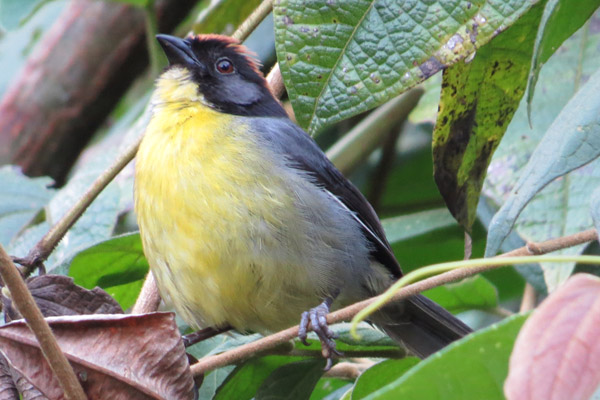 Rare bird paradise protected in war-torn Colombian mountain range (photos)