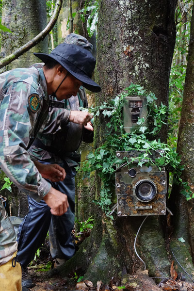 Lek wrapping camera traps in rattan vines. Photo by: Greg McCann.