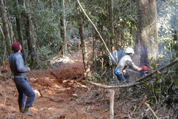 Logging in Southeast Asia. Photo courtesy of Chuck Cannon.