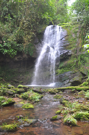 Waterfall in rainforest within the canal zone. Photo by: Christopher Jordan.