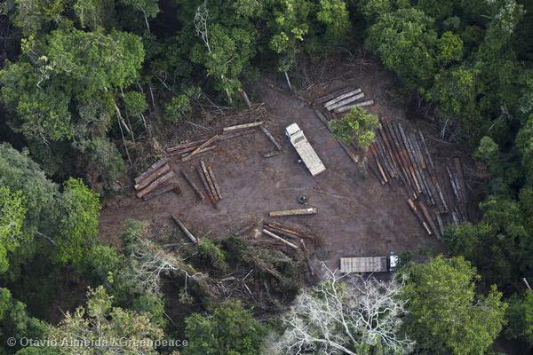 Illegal Logging in Pará State, Brazil as revealed by Greenpeace activists. Photo by: Greenpeace.
