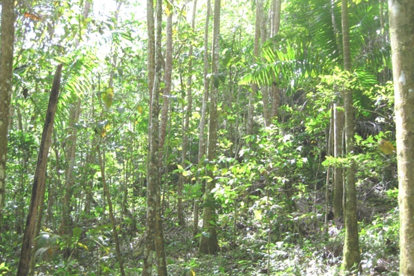 Novel forest in Puerto Rico. Photo by: Ariel Lugo.