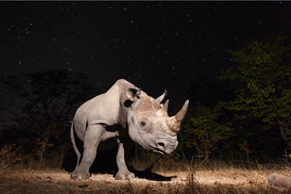 Overall winner of the photography categories and Animal Portraits winner: Black rhino, Zambia by Will Burrard-Lucas.