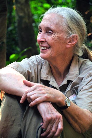 Jane Goodall. 照片: Chase Pickering.