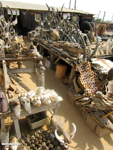 Wildlife fetish market in Togo. Overexploitation of wild animals is one of the three biggest drivers of defaunation. Photo by: Nancy Butler.