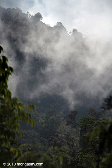 Cloud forest in Indonesia New Guinea. Photo by: Rhett A. Butler.