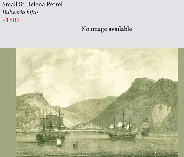 The small Saint Helena petrel (Bulweria bifax), a marine bird, is thought to have gone extinct shortly after its discovery in the 1500s, known only today from fossils. The large Saint Helena petrel was also wiped out. Pictured is an engraving of the island of Saint Helena. Image by: Public Domain.