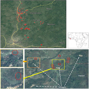 Land use pattern near Gueckedou, Guinea. Landscape is a mosaic of villages surrounded by dense vegetation interspersed by oil palm plots (red) and patches of forest. (top). General or spatial scale north of Gueckedou. (lower group). Finer scale west of Meliandou.