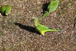 Parrots [bonito_0009]
