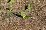 Parrots [bonito_0010]