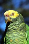 Parrot [bonito_0019]