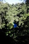 Bonito's 'Mystery Lagoon', a limestone sinkhole [bonito_0054]
