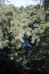 Turquoise blue water of Bonito's Lagoa Misteriosa [bonito_0055]