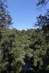 Turquoise blue water of Bonito's Lagoa Misteriosa, a limestone sinkhole [bonito_0057]