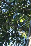 Parrot [bonito_0058]