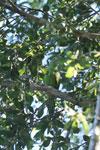 Parrot [bonito_0059]