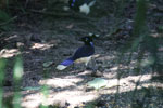 Bird [bonito_0101]