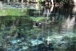 Crystal clear water of the Rio da Prata [bonito_0126]