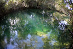 Fish in a pool in the Rio Formoso