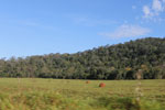 Forest fragments and cattle pasture [bonito_0162]