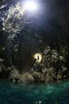 Abismo de Anhumas cavern [bonito_0245]
