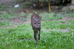 Deer [bonito_0348]