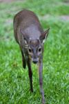 Deer [bonito_0349]