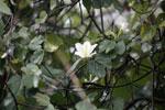 White flowers [bonito_0385]