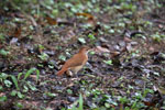 Bird [bonito_0397]