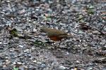 Bird [bonito_0409]