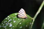 Butterfly [bonito_0574]