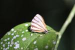 Butterfly [bonito_0576]