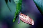 Butterfly [bonito_0617]