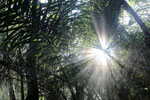 Rays of sun penetrating the forest canopy [bonito_0702]