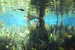 Fish in Bonito's Rio da Prata [bonito_0776]